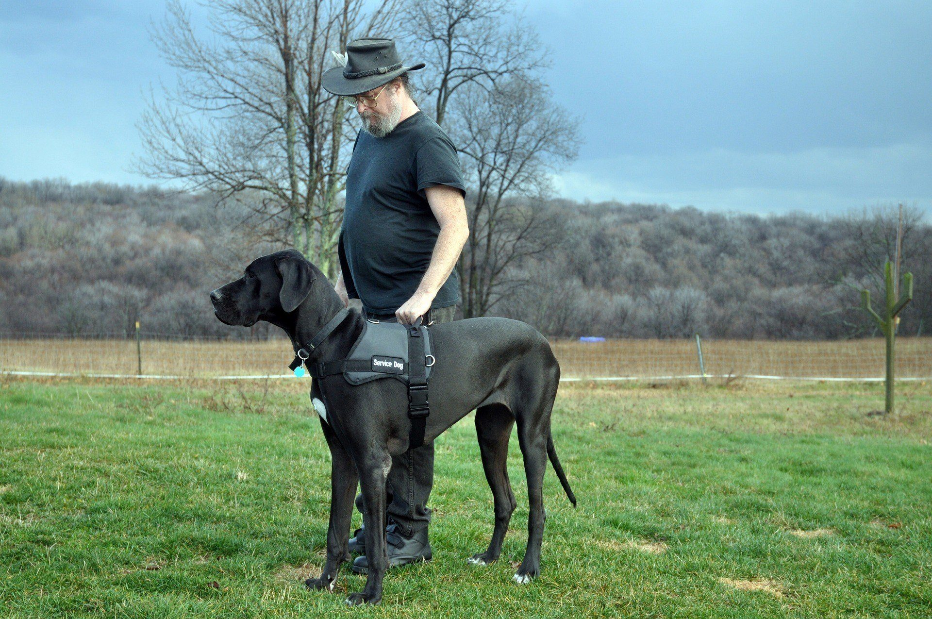 How Service Dogs Act as Caregivers